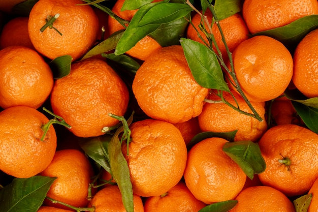 As tangerinas alaranjadas com folhas fecham-se acima.