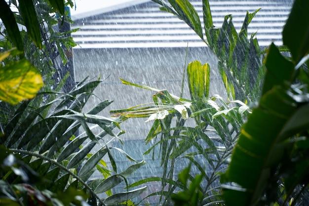 As tempestades de verão caem sobre as folhas verdes e sopra um vento forte.