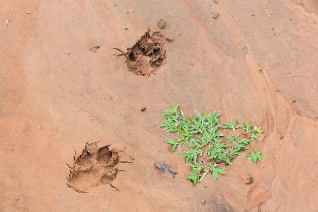 As trilhas de cães