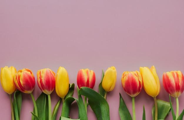 As tulipas vermelhas e amarelas em um fundo isolado rosa copiam o espaço. fronteira de tulipa.