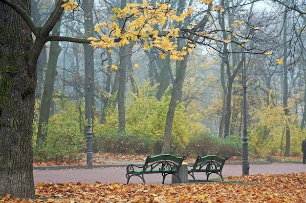 As últimas folhas e bancos dourados da árvore no outono park (manhã nevoenta de novembro no parque ivana-franko, lviv, ucrânia)