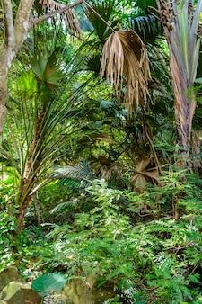 As várias vegetações, flores e árvores da floresta tropical no parque yanoda, na cidade de sanya. ilha de hainan, china.