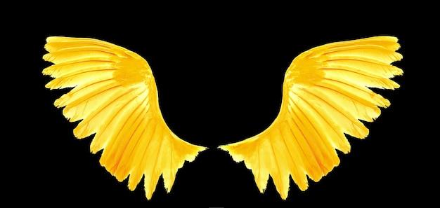 Asa dourada de pássaros em fundo preto