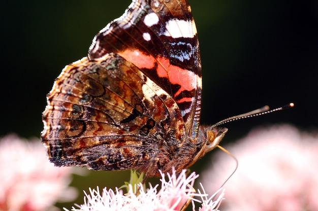 Asas de borboleta perto