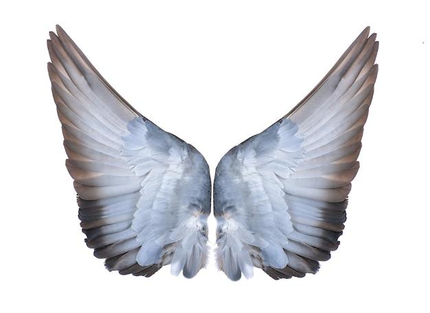 Asas de pássaros no bacground branco