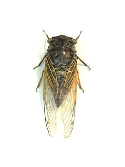 Ascendente próximo da mosca