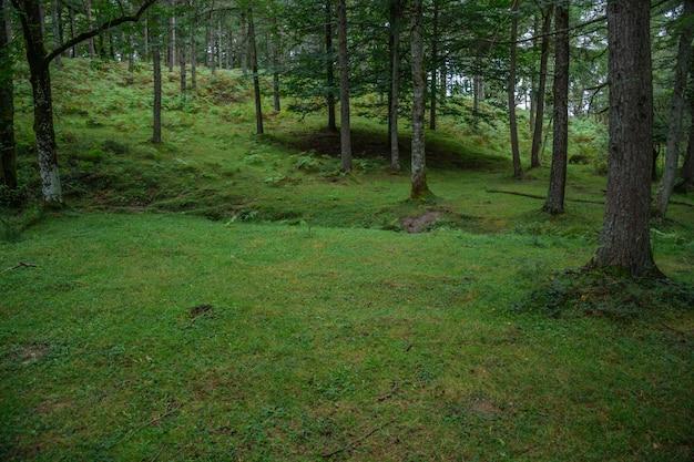 Ascensão verde na floresta