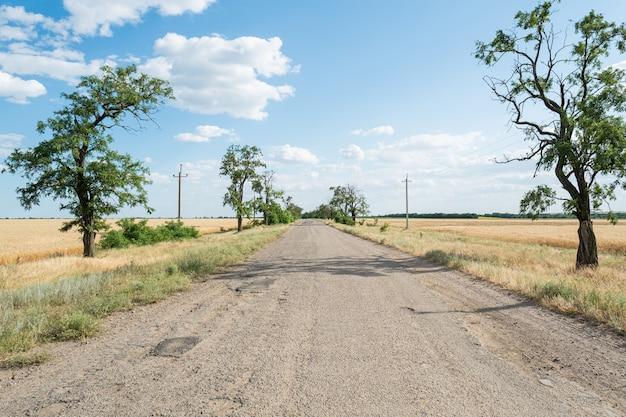 Asfalto betume estrada velha com árvores e trigo campo paisagem nuvens céu azul