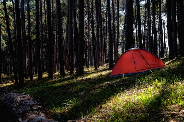 Asian hipster menina fofa adolescente curtindo o nascer do sol fora da barraca. acampando na floresta.