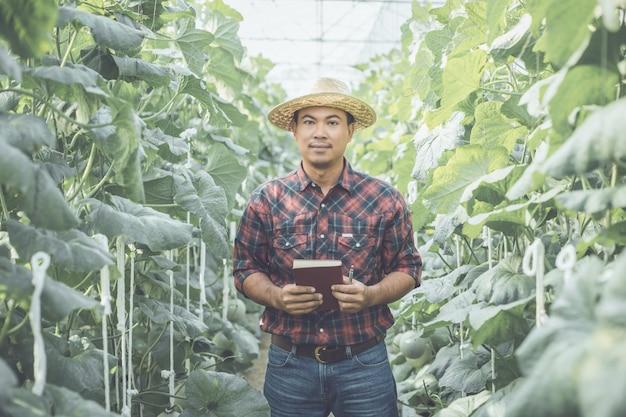 Asiático jovem agricultor trabalhando na fazenda de jovens melões verdes