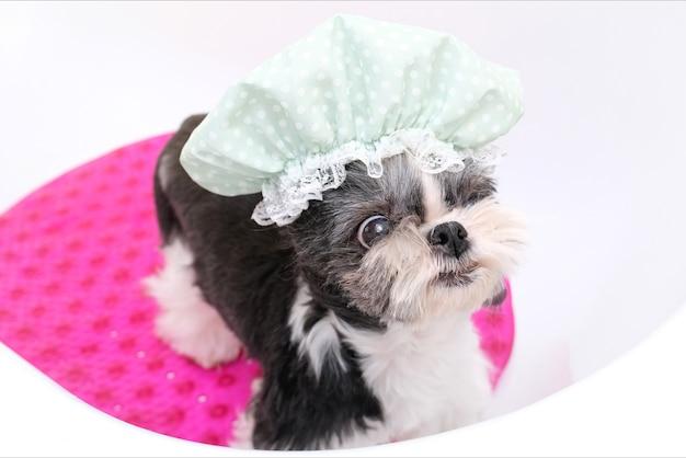 Asseio. dar banho no cachorro no chuveiro. cachorro molhado se banha. clínica de cuidado de animais domésticos. touca de banho