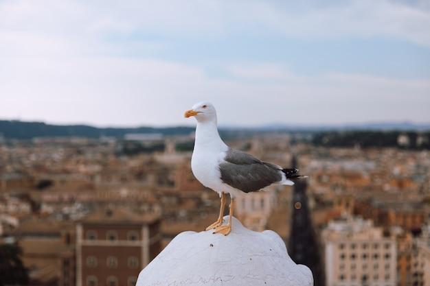 Assento de gaivota do mediterrâneo no telhado de vittoriano em roma, itália. fundo de verão com dia ensolarado e céu azul