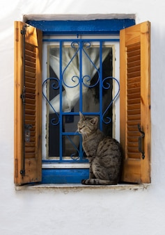 Assento do gato em uma idade da janela