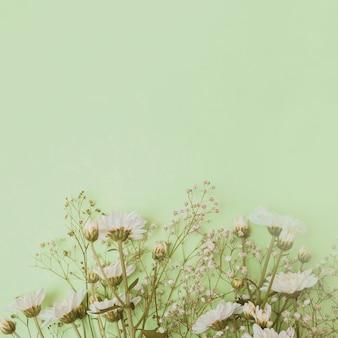 Aster e flores da respiração do bebê na parte inferior do fundo verde