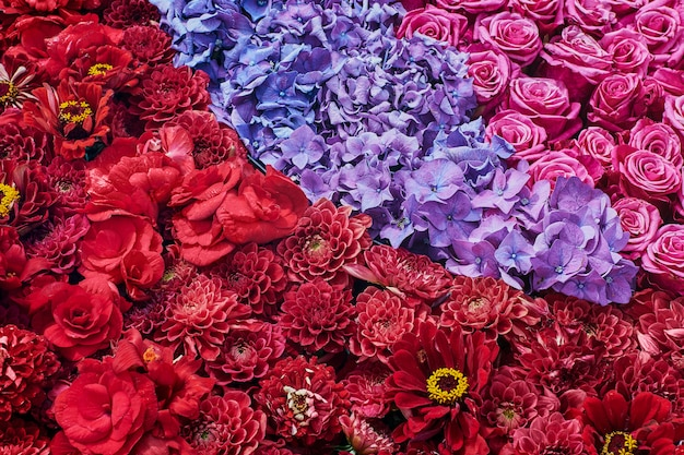 Aster, rosa e flores de hortênsia. lindas flores cor de rosa. vista do topo