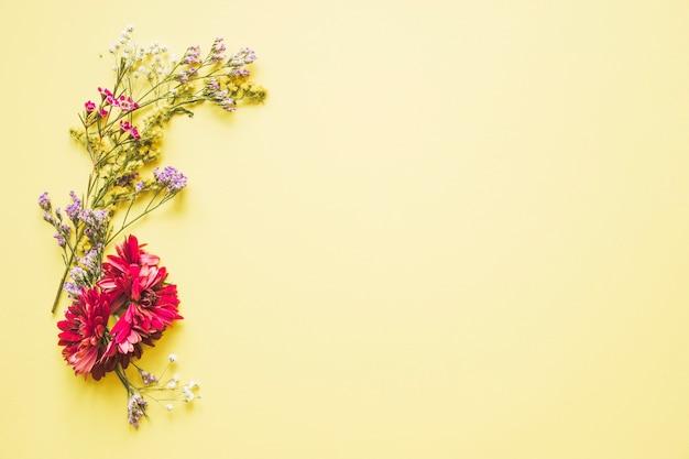 Asters e flores silvestres
