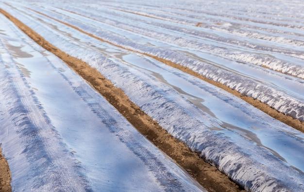 Aterre com tiras protetoras de plástico para planta em campo, início da primavera, abril, na noruega.