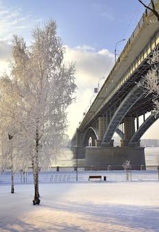 Aterro de michaels no inverno os arcos da ponte oktyabrsky uma bétula em uma clareira nevada