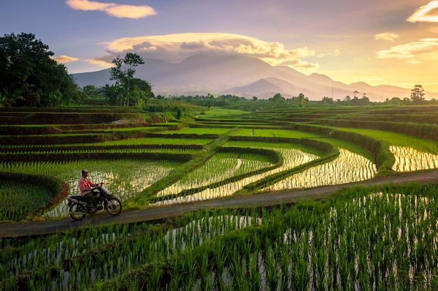 Atividades matinais no campo e arrozais