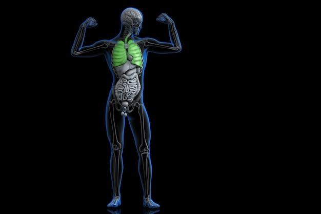 Atleta com pulmões saudáveis de cor verde. ilustração 3d. contém traçado de recorte