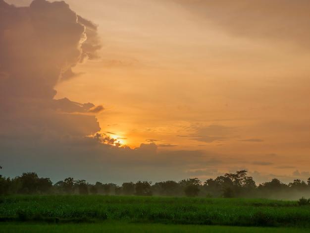 Atmosfera da noite no tempo do por do sol a névoa do pasto verde.