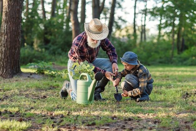 Atraente avô barbudo sênior com seu adorável neto em um gramado verde plantando mudas de carvalho