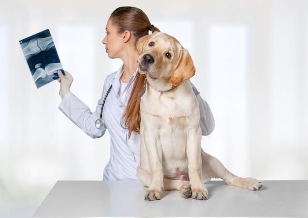 Atraente jovem médica com um cachorro engraçado e um raio-x