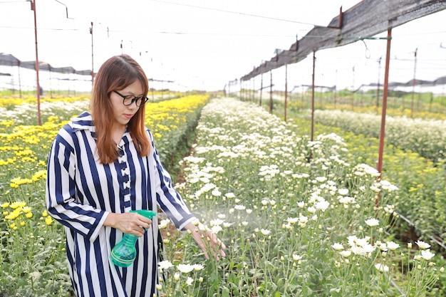 Atraente, mulher asian, pulverização, crisântemo, flores, fazenda