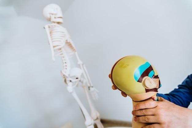 Aula de anatomia para crianças com um boneco do corpo humano