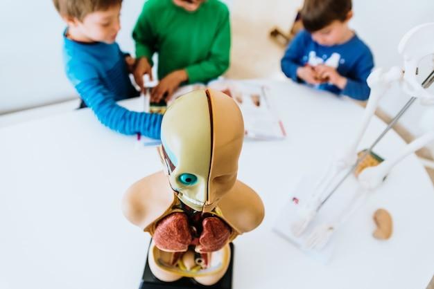 Aula de anatomia para crianças de primaría com um manequim do corpo humano