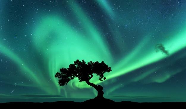 Aurora boreal e silhueta de uma árvore na colina