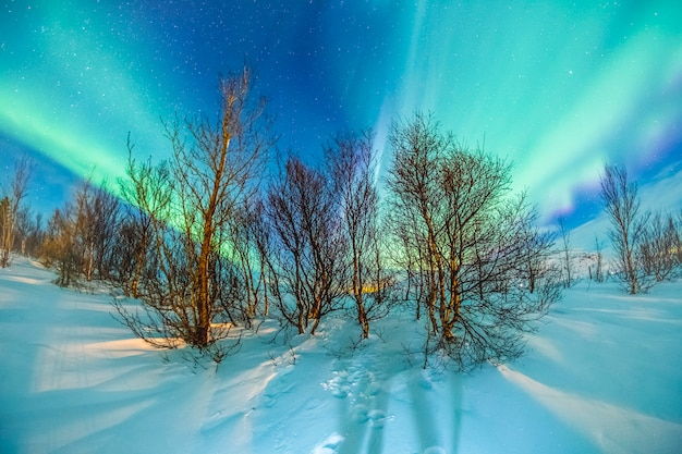 Aurora boreal na neve e árvore