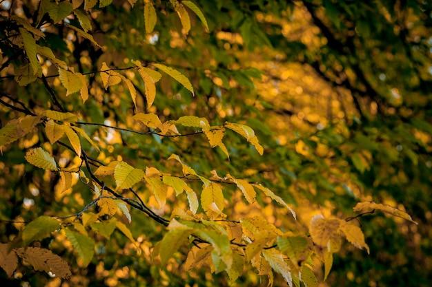 Autumm licença e natureza turva. folhagem colorida no parque. folhas de queda naturais.