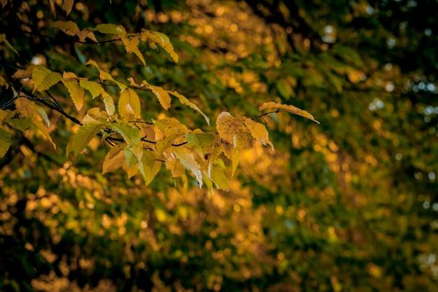Autumm licença e natureza turva. folhagem colorida no parque. fundo natural de folhas caindo.