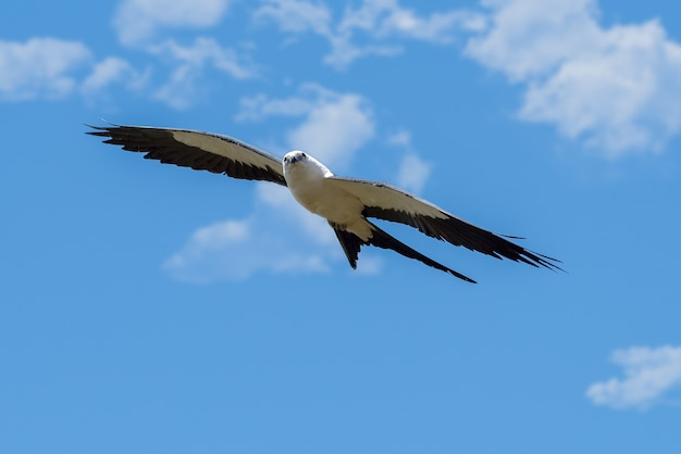 Ave de rapina voando pelos céus com nuvens ao fundo