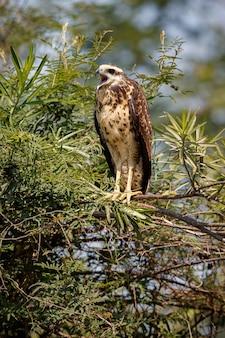 Ave do pantanal no habitat natural