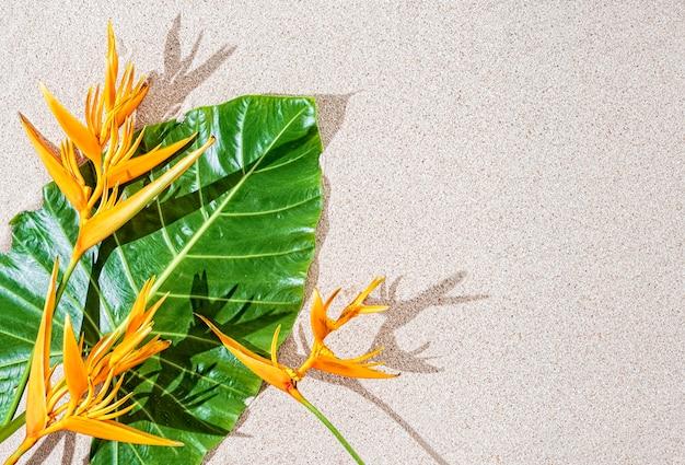 Ave do paraíso exótica flor tropical de laranjeira e grande folha verde sobre fundo de areia, copie o espaço, vista de cima