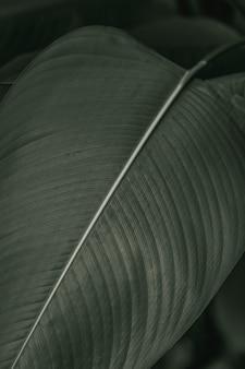 Ave-do-paraíso ou folhas da flor do guindaste em macro fotografia de efeito preto e branco