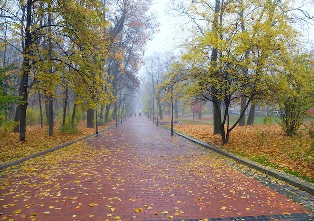 Avenida no outono monótono parque da cidade