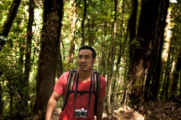 Aventureiro, caminhante, floresta