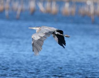Aves de rapina, azul