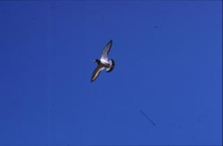 Aves, deslizar