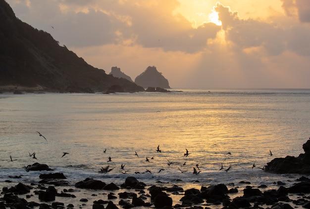 Aves marinhas voando ao pôr do sol na praia nas ilhas fernando de noronha, brasil