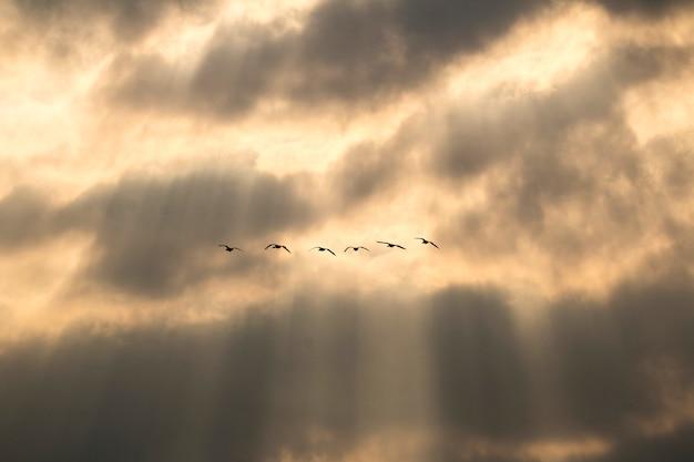 Aves migratórias de inverno
