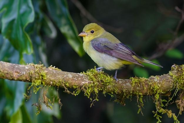 Aves migratórias descansando em um galho de árvore