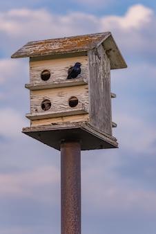 Aves no cimo de uma gaiola de madeira com céu azul e nuvens