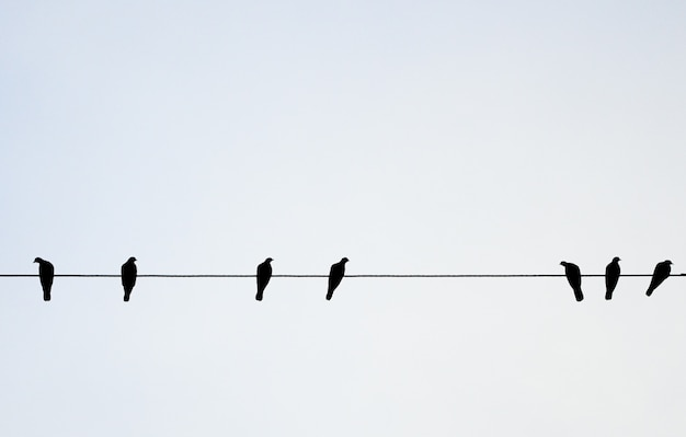 Aves pendurar no fio elétrico