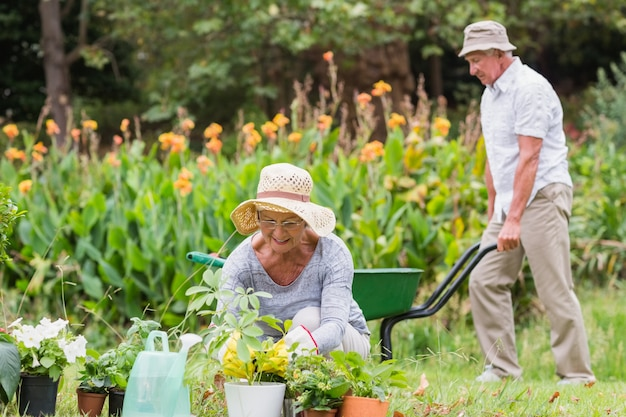 Avó feliz e jardinagem de avô