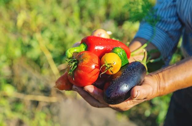 Avó no jardim com legumes nas mãos dela.