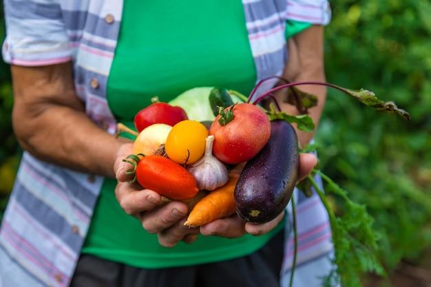 Avó no jardim com uma colheita de legumes. foco seletivo.